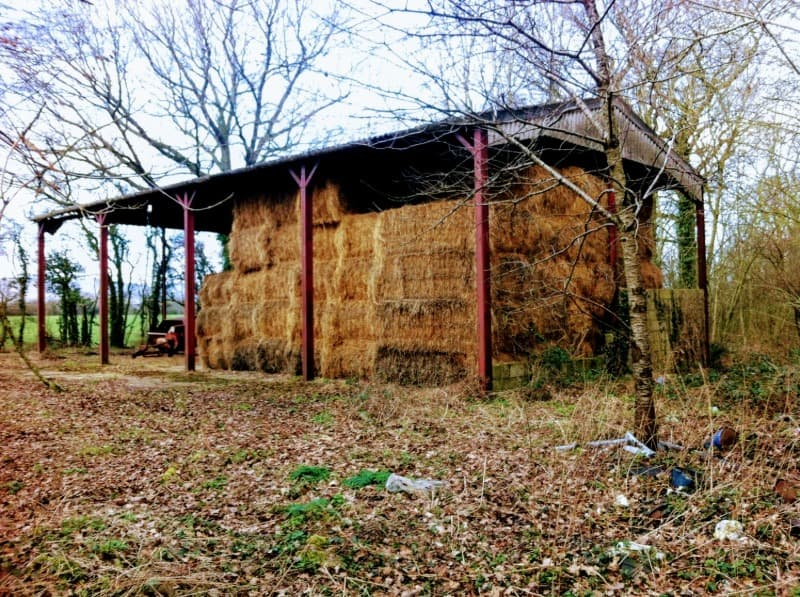 Farm Barn with no sides. Barn is full of hay bales. Barn is sat in a woodland durning winter